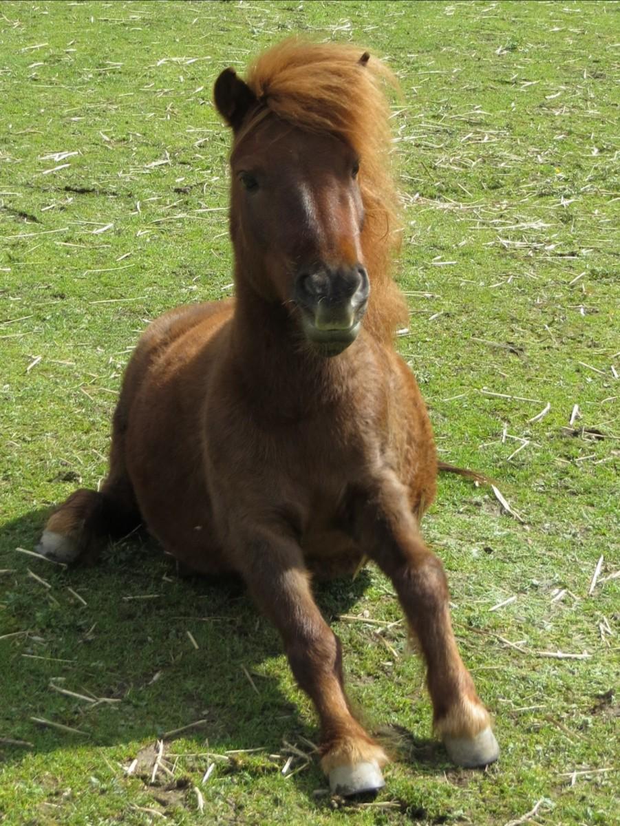 Merlin - geboren am: 21.04.2002